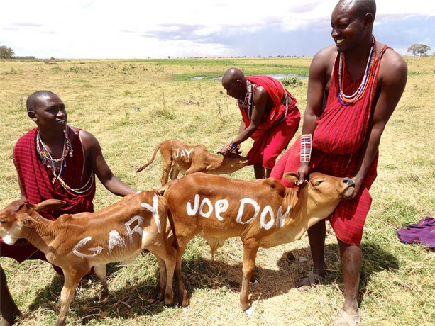 Rascal Flatts and Brad Paisley Give Cows To Masai Tribe